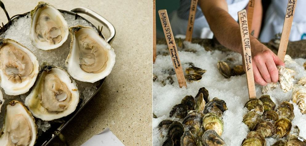 The Oystah of ME Eye: Where to Find Local Maine Oysters